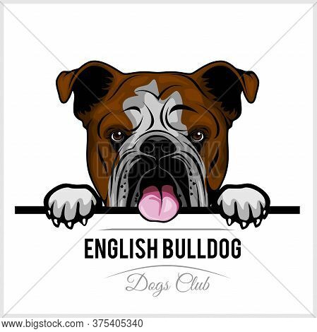 Color Dog Head, English Bulldog Breed On White Background