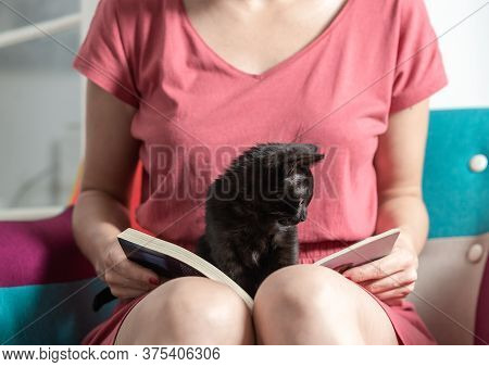 Woman Reading Book At Home With Kitten. Domestic Lifestyle. Woman Relaxing On Chair At Home With Kit