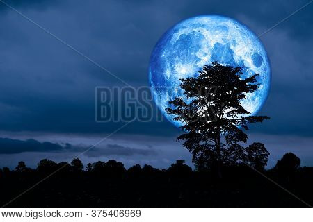 Full Crust Blue Moon And Silhouette Tree In The Field And Night Sky