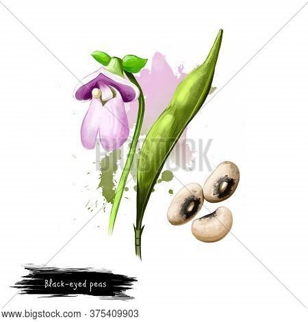 Black-eyed Peas. Digital Art Illustration Of Black Eyed Bean Goat Pea, Legume, Subspecies Of Cowpea,