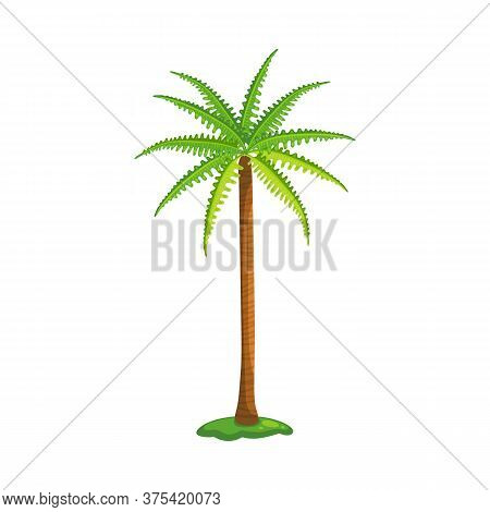 Palm Tree With Green Serrated Leaves And Tall Brown Trunk