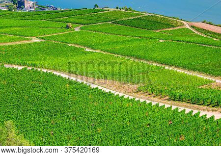 Vineyards Green Fields Landscape With Grapevine Rows On Hills In Rhine Gorge Or River Rhine Valley,