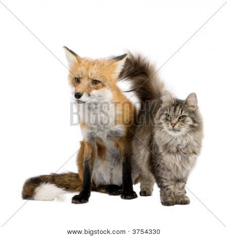 a Fox and a cat in front of a white background poster