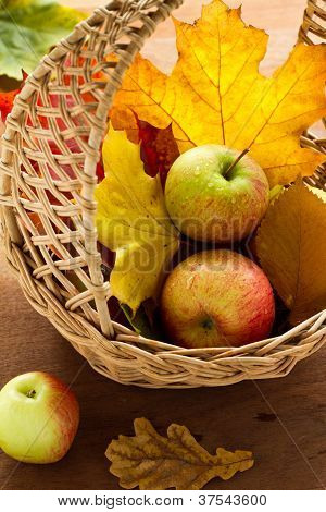 Apples and maples leaves