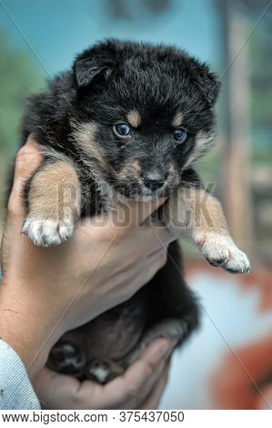 A Person Is Holding A Sweet Small Puppy.