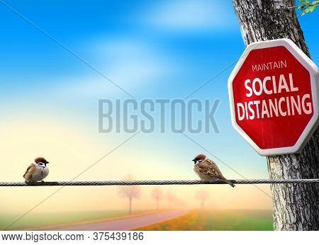 Birds Practicing Social Distancing. Covid-19 Awareness Theme Concept With Humor.