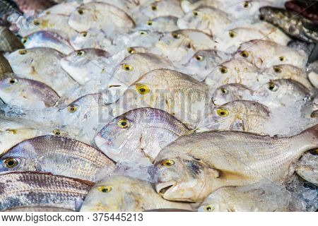 White fish on open fish market in Hurghada city, Egypt