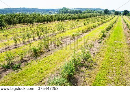 Landscape Monoculture Gooseberry Plant Field Growth Farm