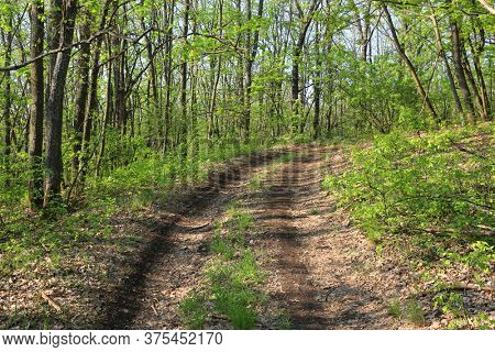 Landscape with dirt road in spring forest