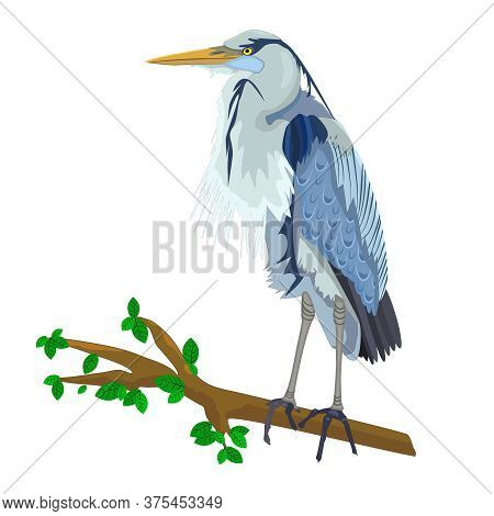 Blue Heron On Tree Branch Isolated On White Background. Heron Bird, Marsh Fauna. Wild Egret With Lon