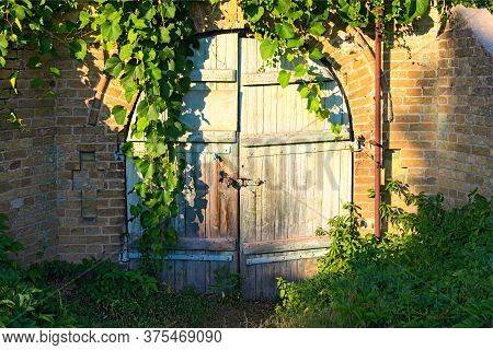 Old Wooden Gate Into The Cellar Covered By Grapevine. Grapevine Leaves Border. Natural Frame. Stone