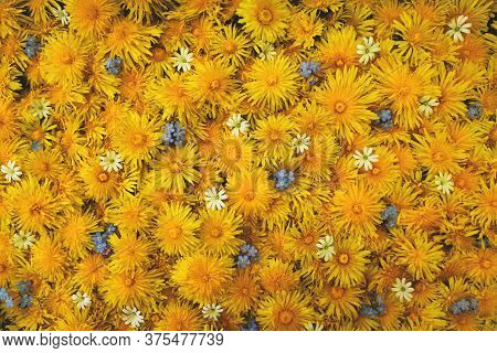 Ackground Of Dandelion Flowers And Forget-me-nots Closeup, View From Above. Place For Your Inscripti