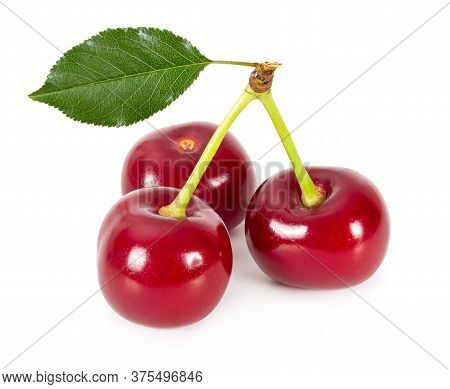 Three Ripe Cherries Isolated On White Background.