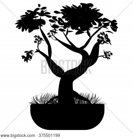 Bonsai Tree. Japanese Bonsai Tree In The Pot And With Grass Around. Plant Silhouette Icons Isolated