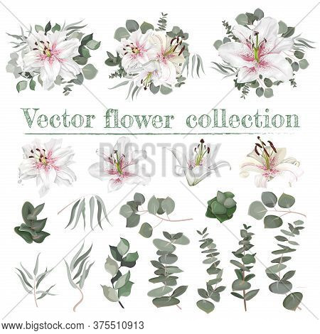 Vector Flower Set. White Lilies With Pink Drops. Different Plants And Leaves, Eucalyptus, Berries. E