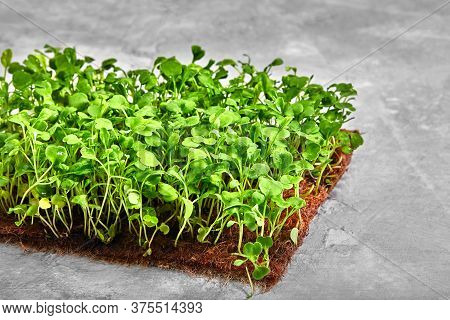 Peas Microgreens With Seeds And Roots. Sprouting Micro Greens On Jute Microgreens Grow Mats. Sprouti