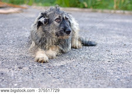Funny Shaggy Puppy Lies On The Pavement. Dog On The Street. High Quality Photo