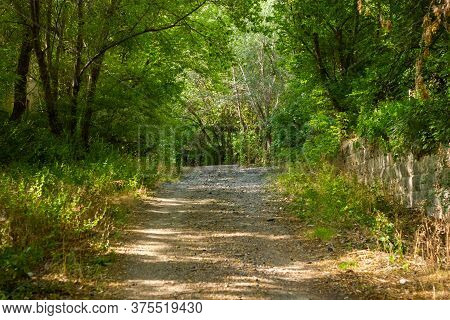 Path In The Forest, Path In The Woods