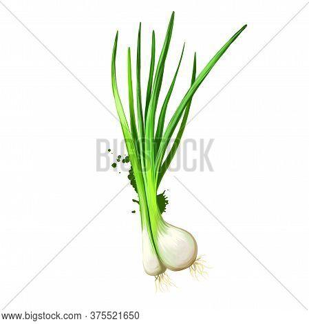 Digital Art Green Onion, Scallion, Spring Onion, Salad Onion Isolated On White Background. Organic H