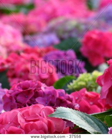 Backdrop Of Flowers