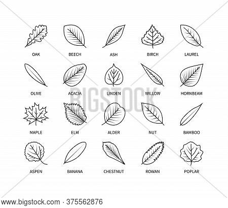 Useful Leaves Linear Icons Vegan Analysis Vector Set. Design Elements Leaf Tree Bush Berries Oxygen