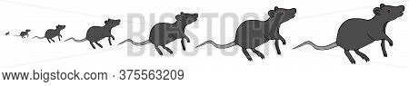 Black Rat. Vector Illustration. Rodent On An Isolated White Background. Abstraction. Peddler Of Plag
