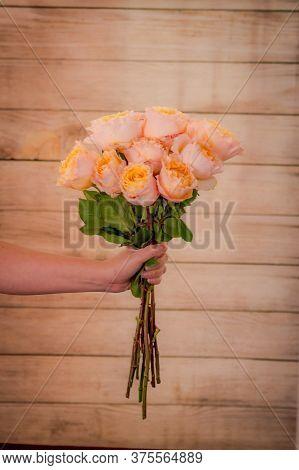 Women Hand Holding A Bouquet Of Campanella Garden Roses Variety, Studio Shot, Peach Flowers