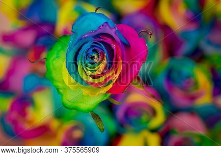 Close Up Of A Bouquet Of Tinted Rainbow Roses Variety, Studio Shot, Multicolored Flowers