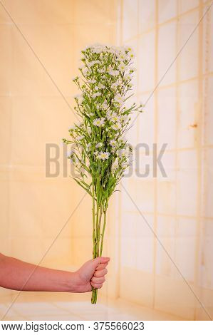 Women Hand Holding A Bouquet Of Astee White Summer Flowers Variety, Studio Shot, White Flowers Varie
