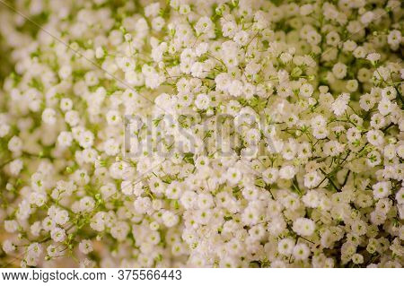 Close Up Of A Bouquet Of Million Stars Foliage Variety, Studio Shot, White Flowers