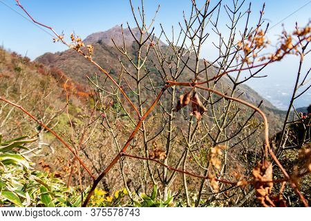 Autumn, Dry Tree Branch And Bushes In Unzen - Asakusa National Park In Nagasaki Prefecture, During S