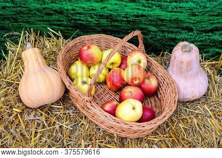 Two Fresh Organic Orange Pumpkins And Red Apples In A Wooden Basket Displayed On Dried Grass For Sal