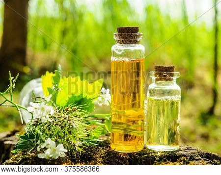 Organic Bio Alternative Medicine, Herbal Medicine., Bottles Of Healthy Essential Oil Or Infusion And