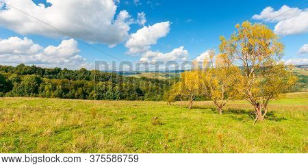 Trees In Yellow Foliage On The Hill. Beautiful Countryside Scenery In Autumn. Sunny Day In Mountains