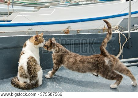 Cats Embracing On A Fishing Boat In Balaklava Harbor, Crimea