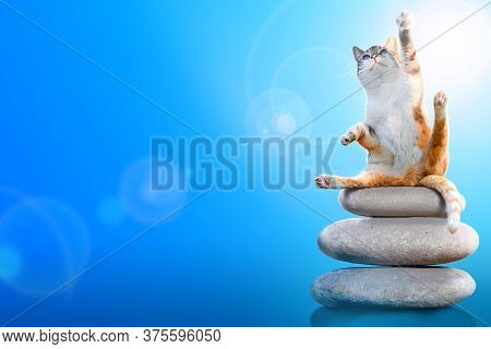 Cat Doing A Yoga Pose While Balancing On Stones. Yoga Class Advertising Concept.
