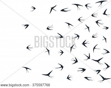 Flying Martlet Birds Silhouettes Vector Illustration. Nomadic Martlets Bevy Isolated On White. Feath