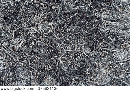 Background And Texture Of Burnt Grass. The Ash Of Burnt Plants On The Scorched Earth. The Threat Of