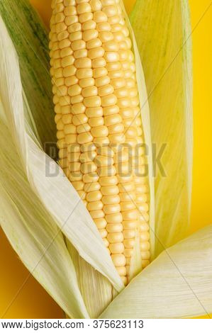 Close Up Corn At Yellow Background. Concept Of Harvest Raw Tasty Food. Top View, Flat Lay, Minimal S