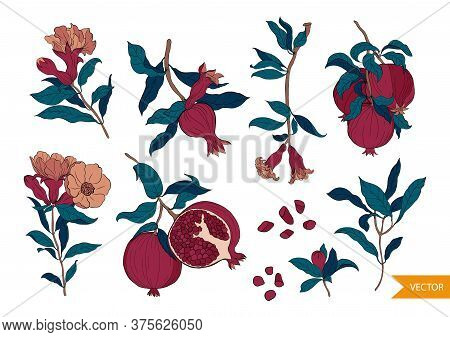 Set Of 10 Pomegranate Composition, Flowers. Leaves And Seeds. Hand Drawn Fruit Style.organic Food Ve