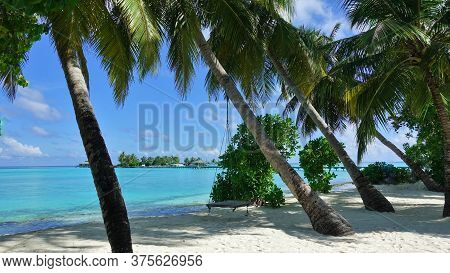 Maldives Beach. White Sand, Palm Trees Leaned Towards Aquamarine Water. In The Shade, A Swing Hangs