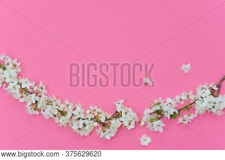 Beautiful Gentle Spring Twigs With White Flowers On A Pink Background Top View Flat Lay With Space F