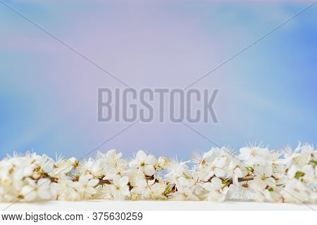 Branch Of Blossoming Cherry On White Wooden Table On Blue Sky Background. Spring Background. Amazing