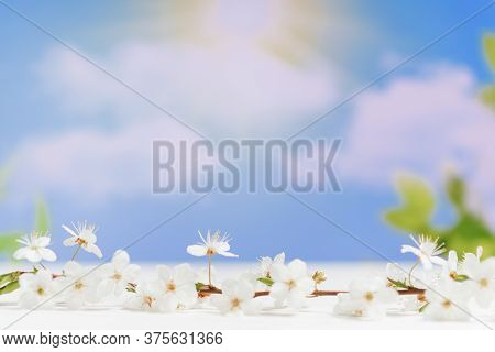 Wooden White Table And Tree Branches With Tiny Flowers Against Blurred Background, Space For Text. A
