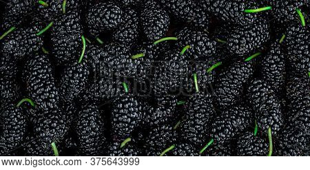Mulberry Background. Organic Mulberrys Top View. Fresh Black Berries Wide Backdrop