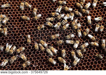 Honeycombs With A Swarm Of Bees Making Honey In An Apiary