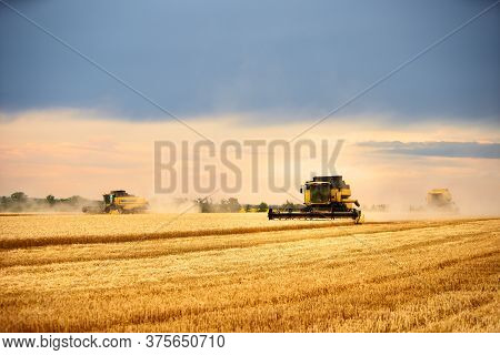 Combine Harvesters Working In Wheat Field With Cloudy Moody Sky. Harvesting Machine Driver Cutting C