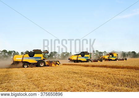 Combine Harvesters Working In Wheat Field With Clear Blue Sky. Harvesting Machine Driver Cutting Cro