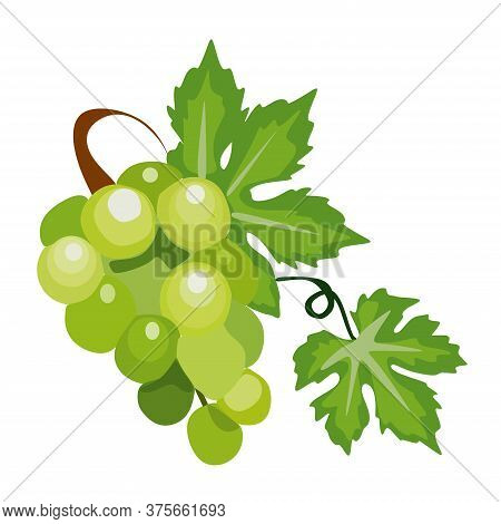 Ripe White Grapes Isolated On White Background.a Bunch Of Yellow Grapes With Green Leaves.vector Ill