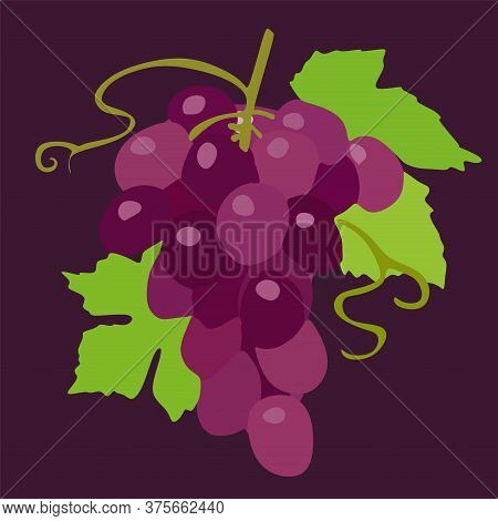 Ripe White Grapes Isolated On A Purple Background.a Bunch Of Purple Grapes With Green Leaves.vector